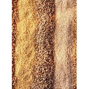Зерновые отходы фото