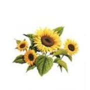 Соняшник (імпорт) 1 п.о Nk Meldimi CRU фото