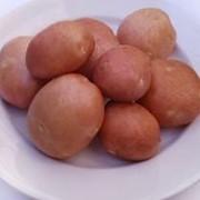 Картофель, сорт беллароза фото