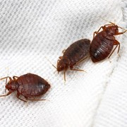 Уничтожение тараканов вывести клопов фото