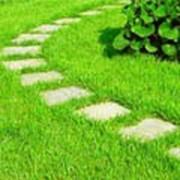 Разбивка газонов фото