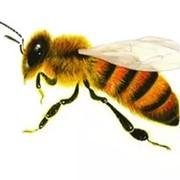 Пчелопакет пчелы фото