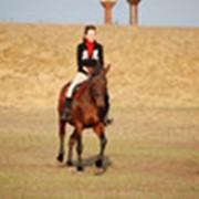 Прокат Лошадей в Киеве, конные прогулки под Киевом. Конные прогулки по лесу, полю или саду, конные туры для опытных наездников. фото