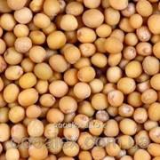 Семена горчица белая (лат. Sinápis álba) фото