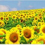 Полный контроль над процессом ПРАВИЛЬНОГО применения пестицидов и агрохимикатов и их количества. фото