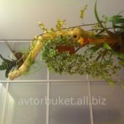 Высадка горшечных растений фото