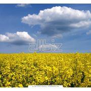 Охрана окружающей среды фото