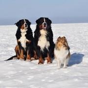 Дрессировка больших и маленьких собак фото