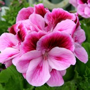 Цветы на срез фото