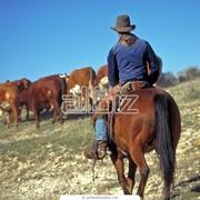 Прогулка на лошадях фото