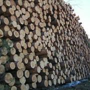 Заготовка леса фото