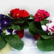 """Цветок искусственный """"Глоксиния в горшке"""" микс цветов БФ01061 фото"""