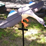 Чучело утки на ПДУ (электрическое) фото