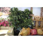 Искусственное дерево «ЛИЧИ» фото