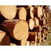 Распиловка лесоматериалов фото