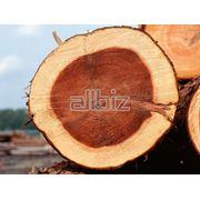 Распиловка леса фото
