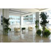 Уход за растениями дома и в офисахресторанах гостиницах фото