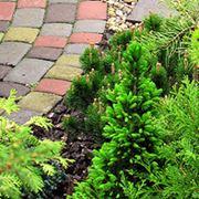 Озеленение и благоустройство сада фото