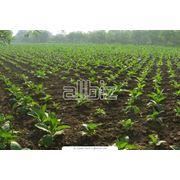 Прикладные исследования Института в сельском хозяйстве фото