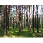 Работы лесоустроительные фото