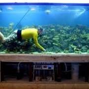 Обслуживание аквариумов фото