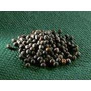 Закупка семян рапса фото