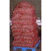 Услуги по очистке сортировке и упаковке овощей (картофель свекла лук) фото