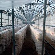 Помощь в оборудовании грибных производств фото