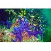 Услуги спортивного инструктора подводный натуралист Underwater Naturalist фото
