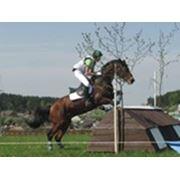 Лошадь жеребец Дрейф фото