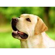 Корм для собак фото