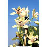 Орхидеи фото