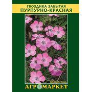 Семена цветов сорт Гвоздика забытая пурпурно-красная. Опт фото