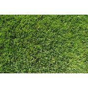 Трава газонная профессиональная (Германия): 1. Регенерация. 2. Спорт Либеро. 3. Профи. 4. Классическая. 5. Спорт. 6. Классический фото