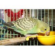 Корм сухой для птиц фото