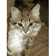 Наложение гипсовой повязки животным фото