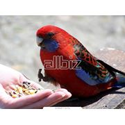 Корма для птиц фото