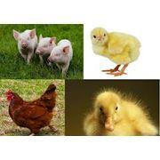 Кормовые добавки для птиц фото