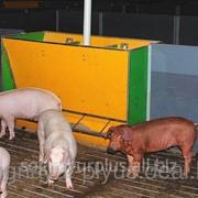 Оборудование для кормления свиней, кормушки для свиней фото