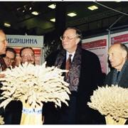 Институт физиологии растений и генетики НАНУ Научные разработки фото