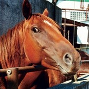 Ветеринария лошадей фото