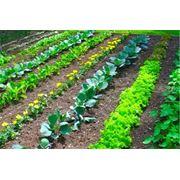Средства защиты растений от сорняков фото