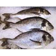 Рыба деликатесная дорадо фото