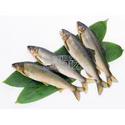 Рыба сушеная фото