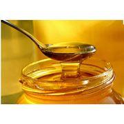 Клеверный мед фото