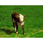 Концентраты для производства заменителей цельного молока фото