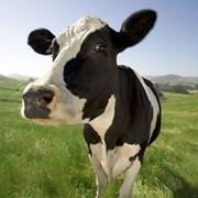 Уст-ка доения молока в бидон УДБ-100 (100 голов, ц фото