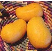 Мякоть фруктов фото
