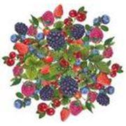 Ягоды дикорастущие:черникаклюкваголубикабрусника -продукция замороженная и свежая фото