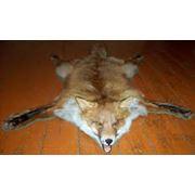 Шкура лисы фото